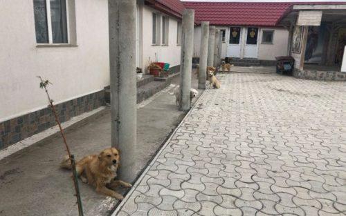 Poveste ÎNSPĂIMÂNTĂTOARE! Câinii unui lăcaș de cult din România au fost MALTRATAȚI în ultimul hal. Imagini revoltătoare, de o cruzime greu de imaginat