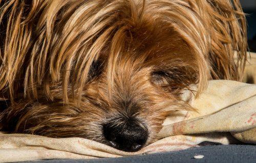 Motivul HALUCINANT pentru care autoritățile au confiscat câinele unei famili. Uite care este cauza