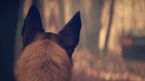 A dus câinele într-o pădure, departe de casă, și l-a abandonat. Este ireal ce a urmat