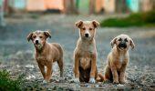 Cruzime fară margini! Trei pui de câine au fost ARUNCAȚI în fosa septică! Uite cum au fost salvați