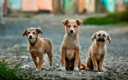 Când au fost domesticiți câinii, care sunt originile lor