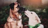 Cum și când au fost câinii domesticiți