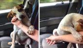 """Reacţia emoţionantă a unui câine, atunci când îți dă seama că a fost adoptat a ajuns virală pe internet. Noua stăpână a izbucnit în lacrimi: """"Acest lucru mi-a sfâşiat inima…"""""""