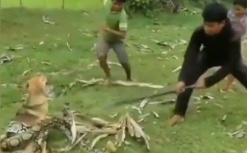 Șocant! Cum au salvat niște copii viața unui câine. Întregul moment a fost filmat