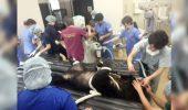 Un URS a fost operat de CATARACTĂ. Care este ACUM starea de sănătate a animalului