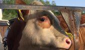 Animale din Romania, exportate și ucise în mod barbar în Orientul Mijlociu