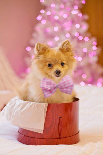 Apel către toți iubitorii de animale: Animalele nu sunt cadouri de Crăciun!