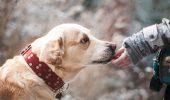 Emoționant! Imaginea care vă poate afecta emoțional! Uite ce face Sully, câinele fostului preşedinte american George H. W. Bush