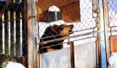 O nouă salvare miraculoasă în România! Toată familia dormea, iar câinele a simțit pericolul