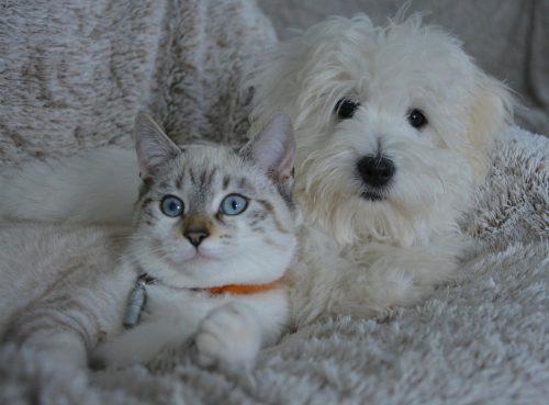 """Anunț de ULTIMĂ ORĂ de la CERCETĂTORI: """"Orice stăpân de câine sau pisică…"""""""