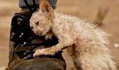 """Povestea tristă a lui Feito a impresionat o lume întreagă. """"Era cea mai frumoasă și mai iubitoare creatură pe care am văzut-o vreodată…"""""""