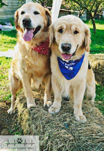 Vă mai amintiți de Aksel, câinele EROU care a ajutat zeci de copii cu autism? Uite ce au făcut în memoria lui