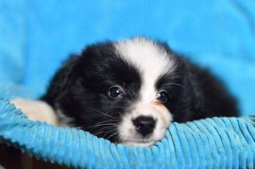 Să căutăm un nume pentru câinele care va face parte din PRIMA UNITATE canină de avalanşă