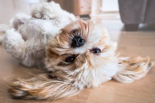 Trucuri mici, efecte mari: sfaturi utile pentru toți iubitorii de animale