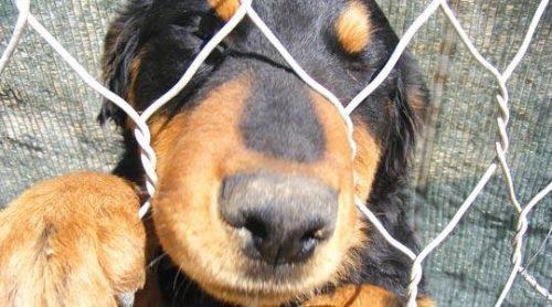 Atenție! Mii de român vor DREPTATE în cazurile de cruzime împotriva animalelor. Uite ce vor