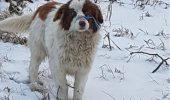 Cel mai norocos câine din România! E o MINUNE că a scăpat. Salvatoarea a rămas MUTĂ DE UIMIRE