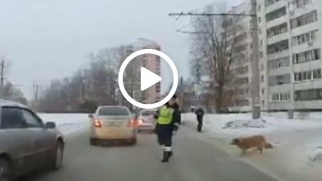 INCREDIBIL! Cum a SALVAT un polițist VIAȚA unui câine șchiop care încerca să traverseze strada