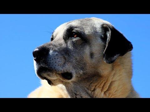 A dat dovadă SUPREMĂ de devotament. Un câine și-a așteptat stăpâna o lună lângă casa arsă