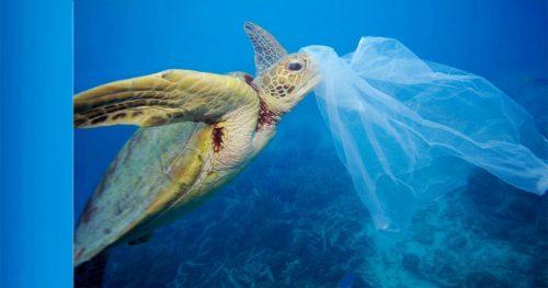 ȘOCANT! Populația marină, îmbibată cu plastic. Câte fibre de plastic ajung în intestinele exemplarelor marine