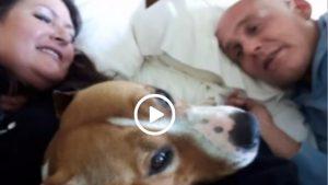Cum s-a terminat cea mai mare AVENTURĂ a unui câine campion. Cum a DISPĂRUT Gale pe aeroportul din Atlanta
