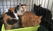 Actrița Florina Luican a murit, iar NOUĂ pisicuțe pe care le-a salvat de pe străzi au rămas pe drumuri!