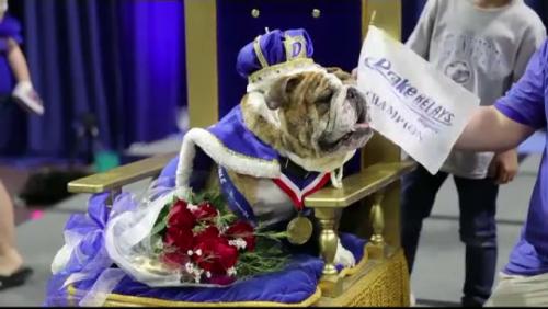 Incredibil, dar adevărat! Uite pentru ce a primit acest câine MARELE PREMIU!