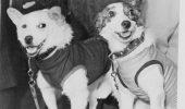 Câinii și cucerirea spațiului