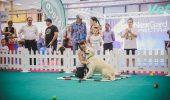 Catwalk pentru animalele de companie în acest weekend