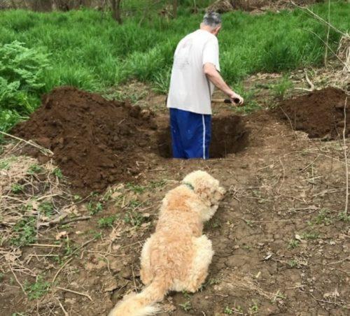 Un câine a fost prezent la MOMENTUL EMOȚIONANT când i se săpa groapa. Este INCREDIBIL ce a urmat după