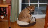 ȘTIAȚI CĂ animalul tău de companie trebuie să aibă un loc de culcare potrivit?