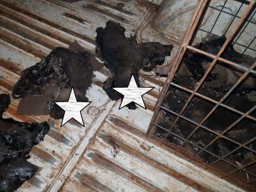 UPDATE! Tudor Ionescu face apel la populație pentru prinderea celor care au aruncat acești OPT pui în smoală