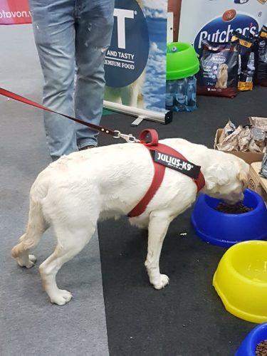 Mâncarea ajută în dresajul câinelui