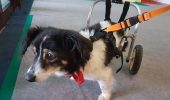 EXCLUSIV! Povestea EMOȚIONANTĂ a unui câine paralizat, după un accident auto. Ce a urmat este un MIRACOL / VIDEO