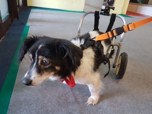 Povestea EMOȚIONANTĂ a unui câine paralizat, după un accident auto. Ce a urmat este un MIRACOL / VIDEO