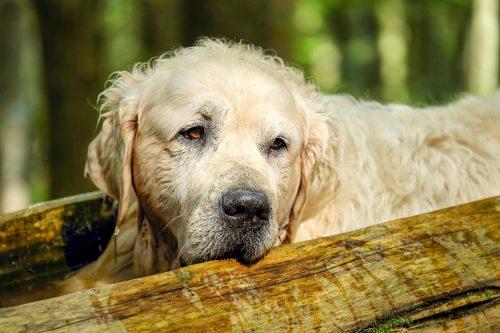 La cât timp trebuie tuns un CÂINE? Medicul veterinar răspunde IUBITORILOR DE ANIMALE