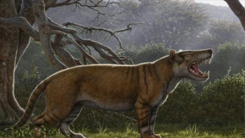 UIMITOR! Iată unde a fost DESCOPERIT cel mai mare mamifer care a trăit pe PĂMÂNT