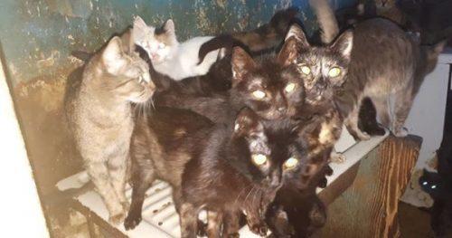 CAZ TULBURĂTOR în București! O femeie ținea 41 de pisici închise într-o bucătărie, fără lumină. Ce s-a întâmplat cu bietele feline
