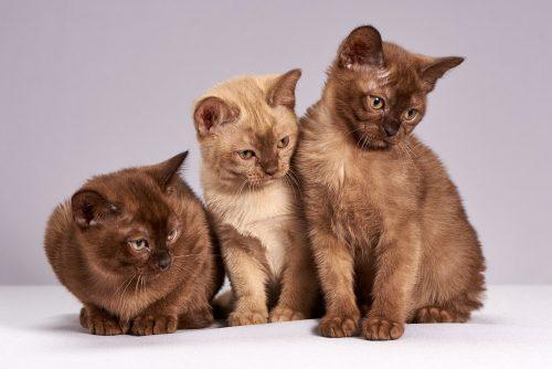 Cât de NOROCOȘI sunt stăpânii de pisici. Uite ce BENEFICII aduc