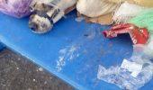"""CRUZIME INCREDIBILĂ! Iubitorii de animale din România sunt șocați: """"Cineva a vrut să se asigure că nu mai avea nicio șansă"""""""