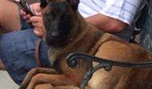 Rylee, câinele care a SUPRAVIEȚUIT unui episod horror. Patrupedul a fost înghițit de apă