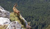 Capre negre printre TURIȘTI,în Munții Bucegi! Imagini incredibile