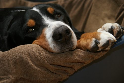 VIDEO AMUZANT! Se pare că cel mai bun prieten al câinelui este… somnul, nu omul!