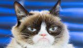"""Celebra pisică """"Grumpy Cat"""" a MURIT. Toată lumea PLÂNGE: """"A fost copilul nostru…"""""""