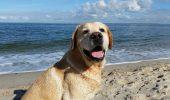 Cât te costă dacă mergi cu animalul de companie pe litoral?! Un fleac: o amendă de mii de lei!