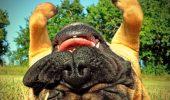 IMPRESIONANT! Câinele este un animal căruia îi place să fie curat și să miroasă a parfum? Uite ce spun SPECIALIȘTII