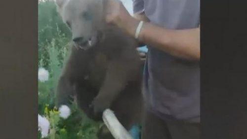 INCREDIBIL! Câțiva localnici s-au amuzat teribil cu un puiul de urs. Reacția Poliției – VIDEO