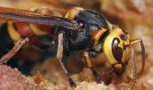 Invazia unei specii de insecte foarte periculoase a GENERAT ISTERIE într-o insulă agreată de turiști