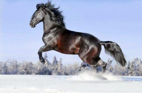 Prima fermă de cai inclusă în patrimoniul UNESCO