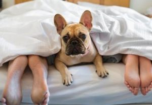 UPS! Faci AMOR în fața câinelui tău? Atenție, își amintește perfect ce ai făcut! Specialiștii au demonstrat asta