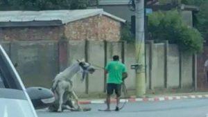 Încă un CAZ DE CRUZIME îngrozește opinia publică din Romania. Un cal a murit după ce a fost bătut cu bestialitate